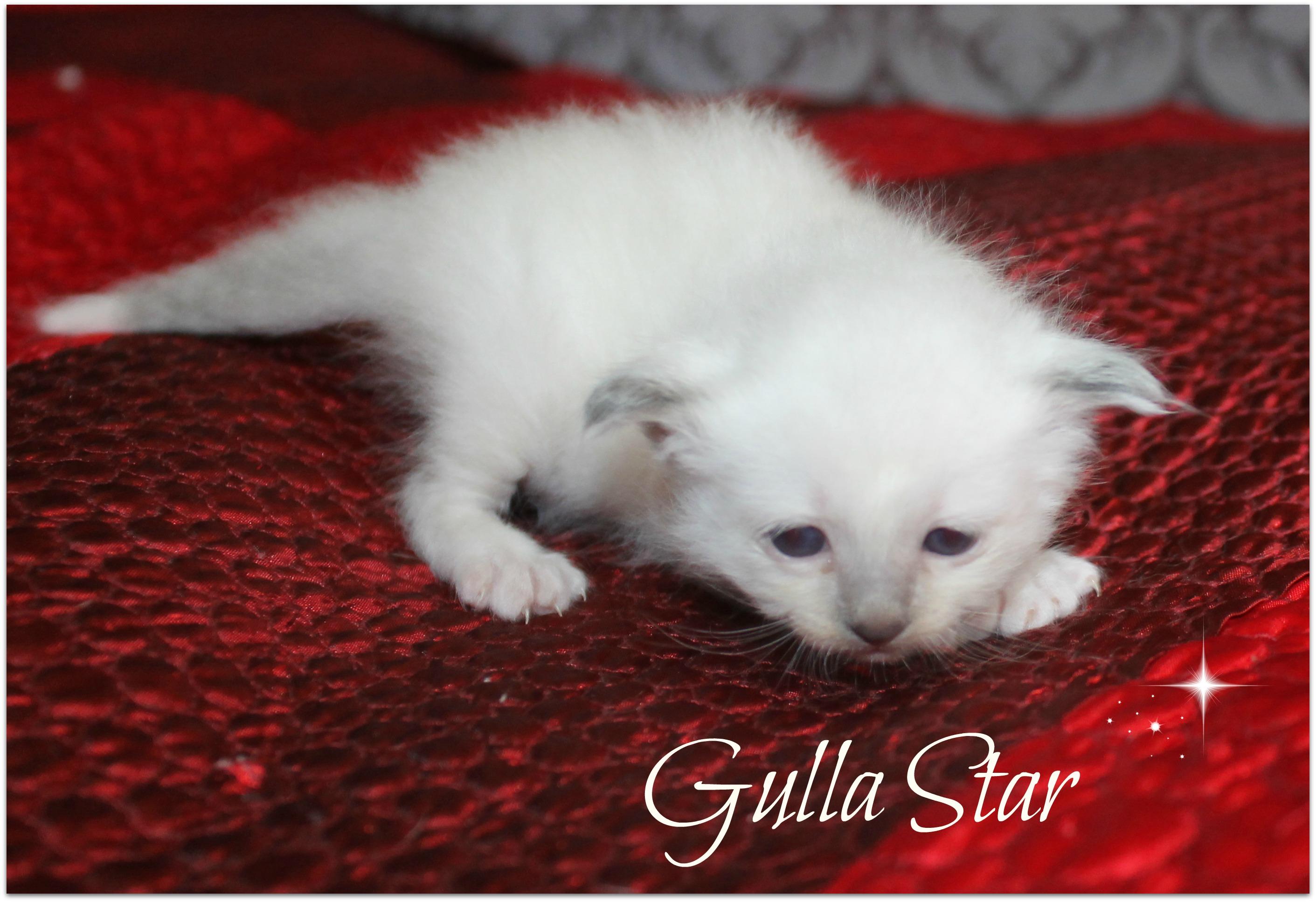 gulla_0