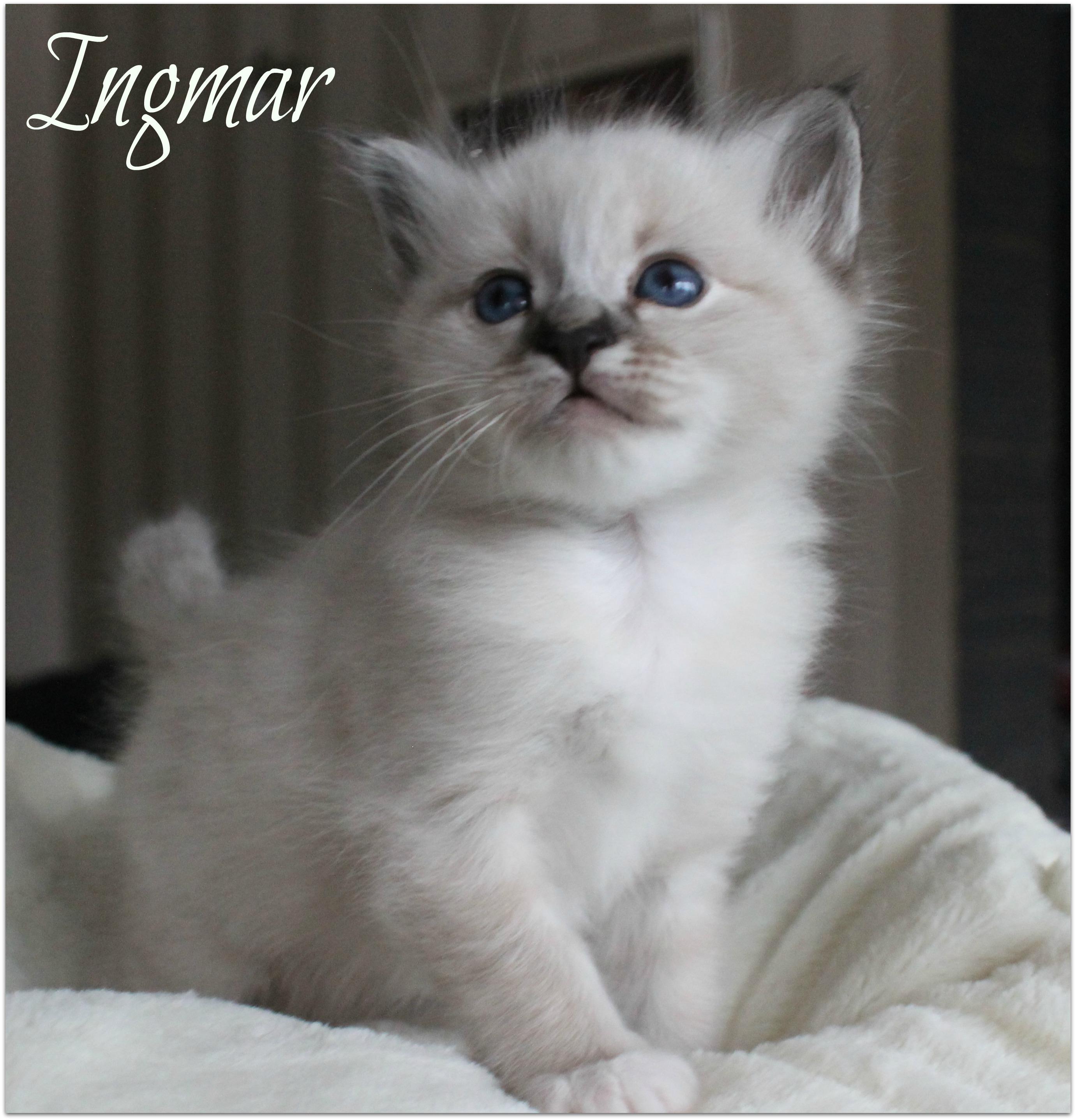ingmar2