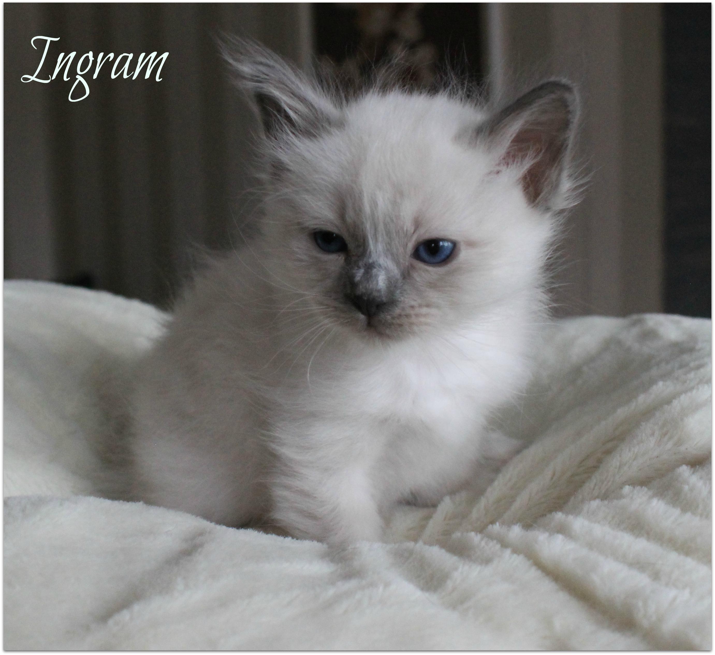 ingram2