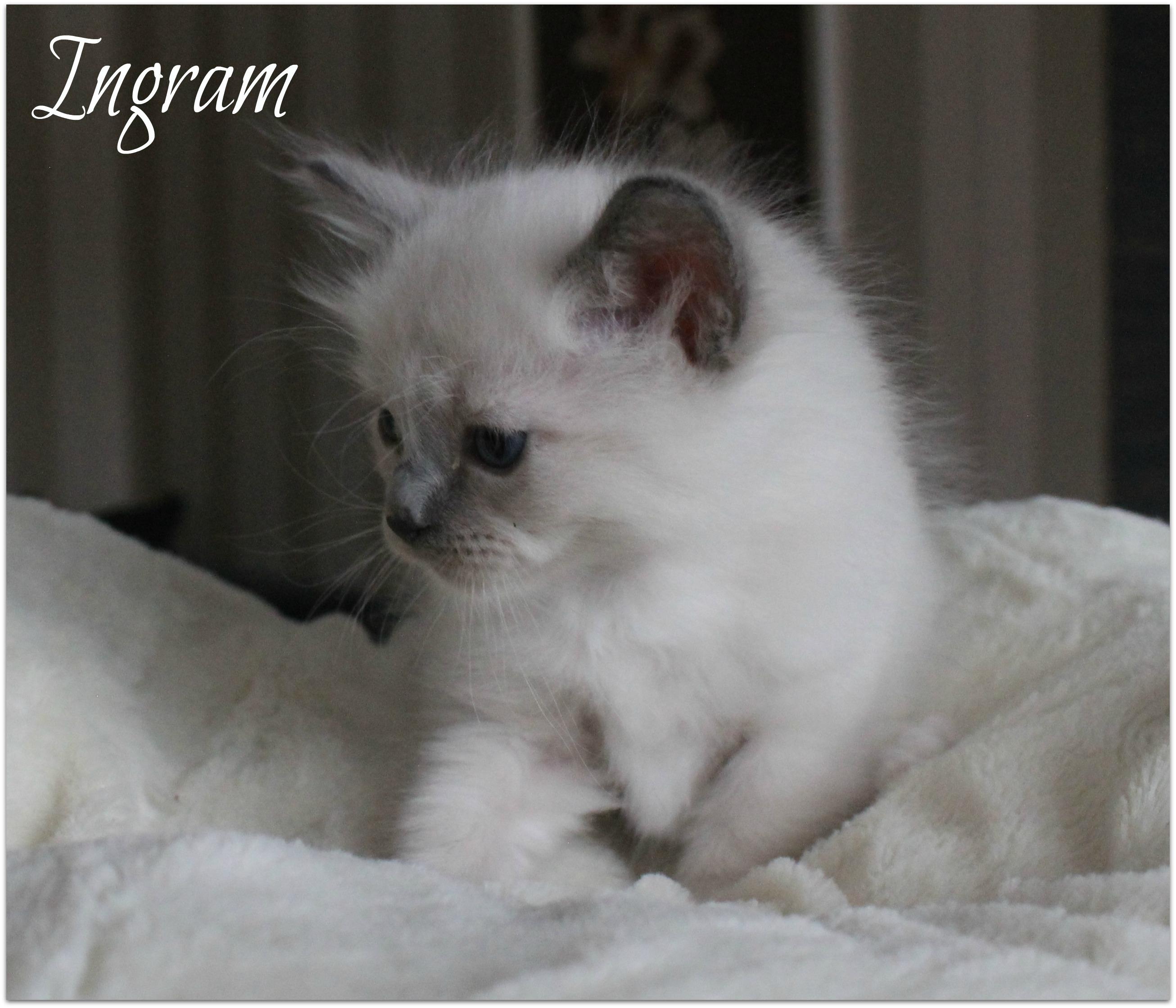 ingram3