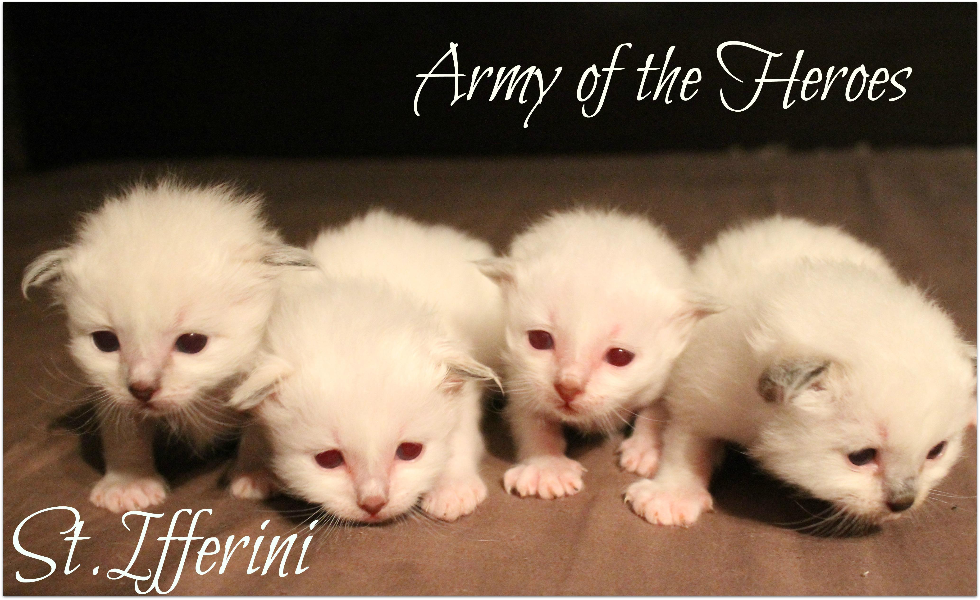 armee4