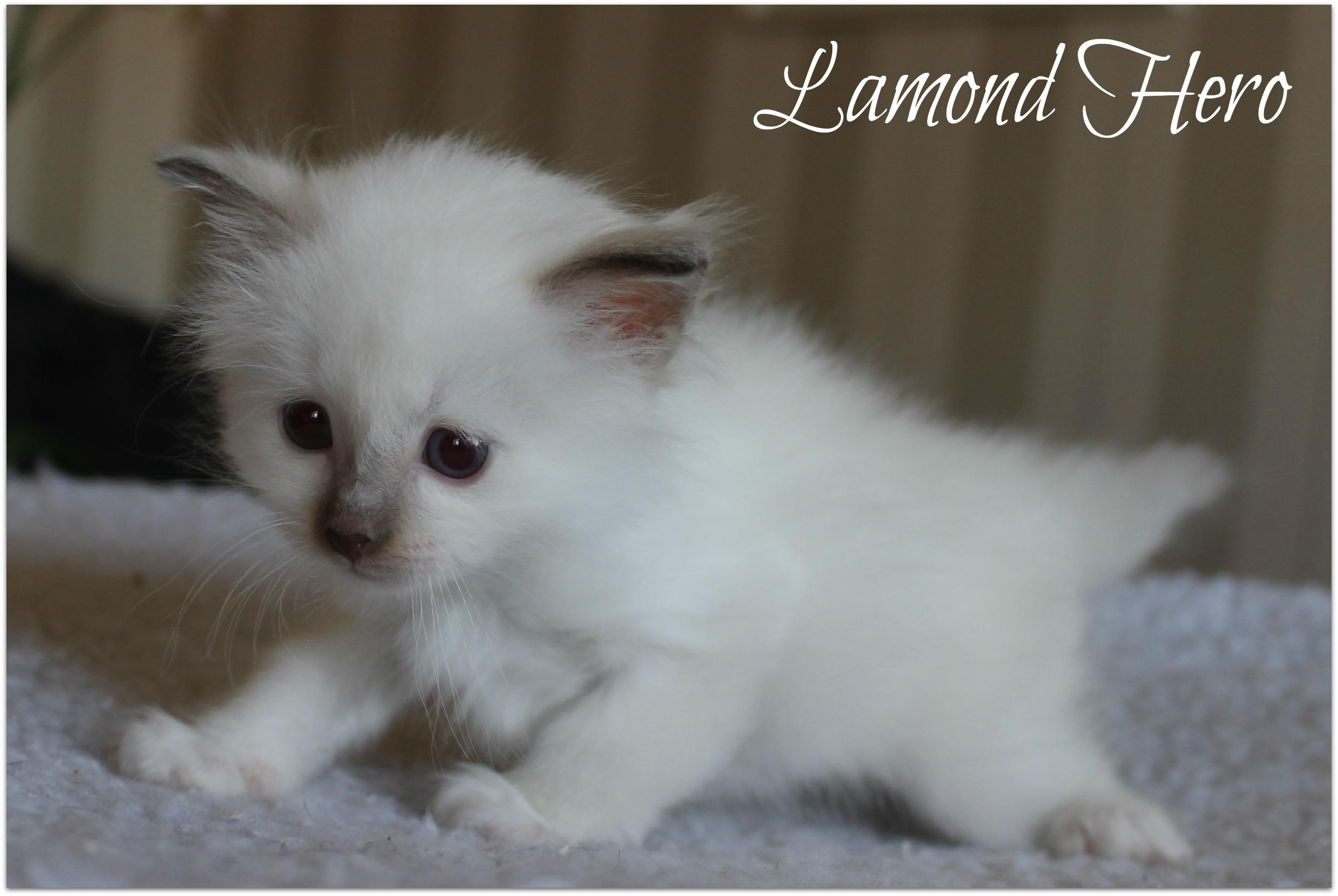 lamond1