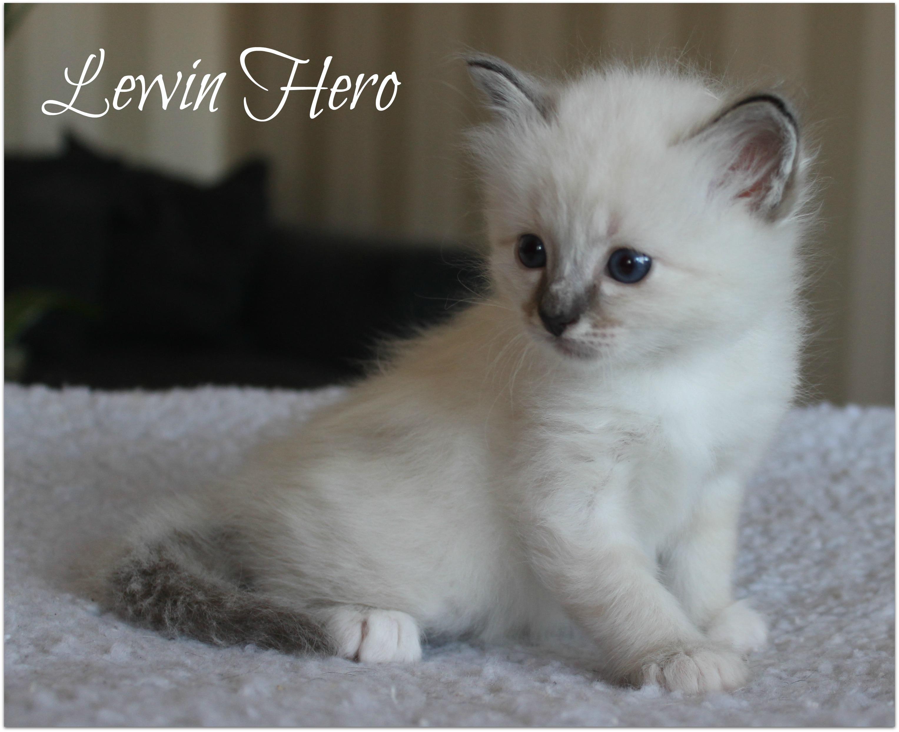 lewin1