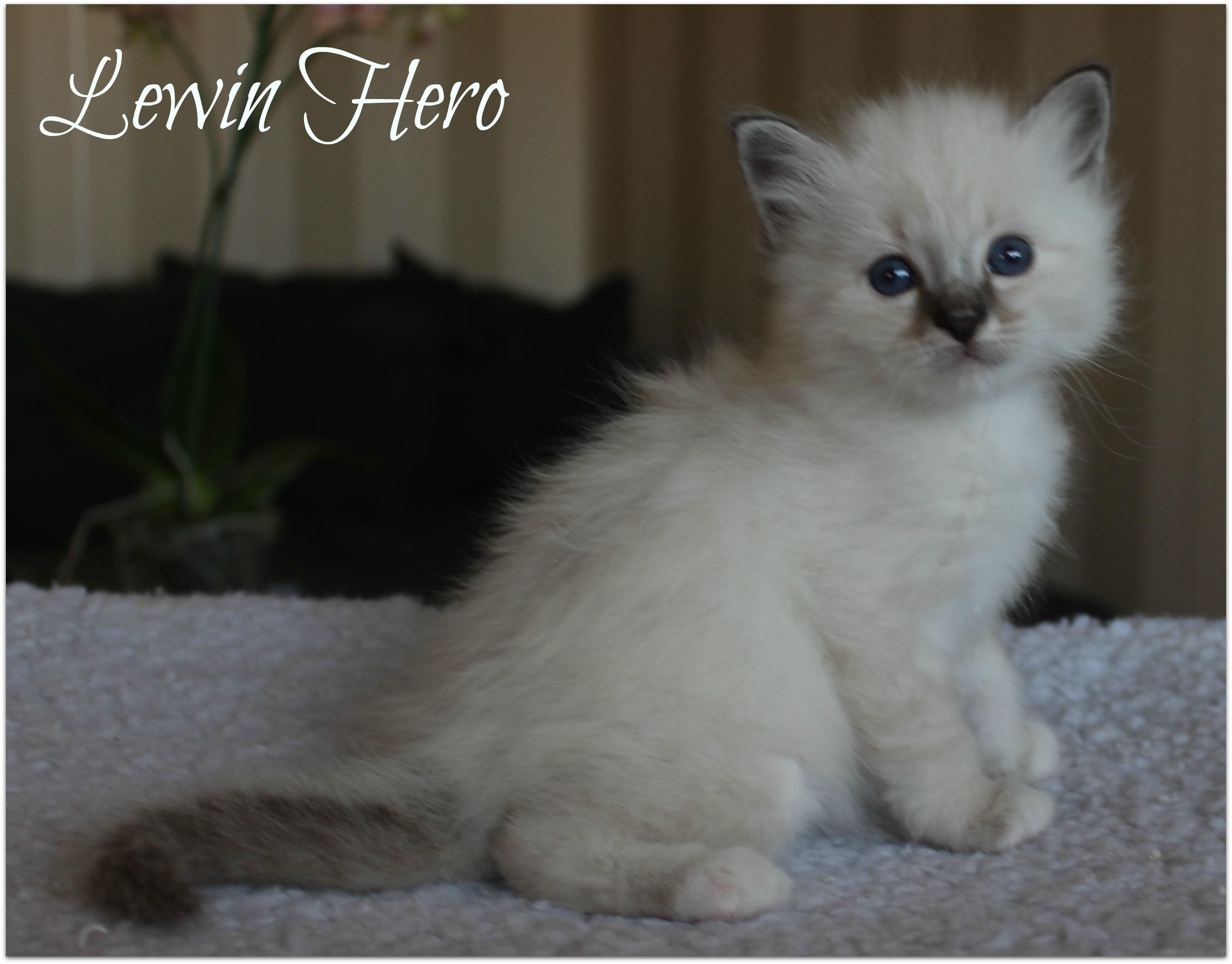 lewin2