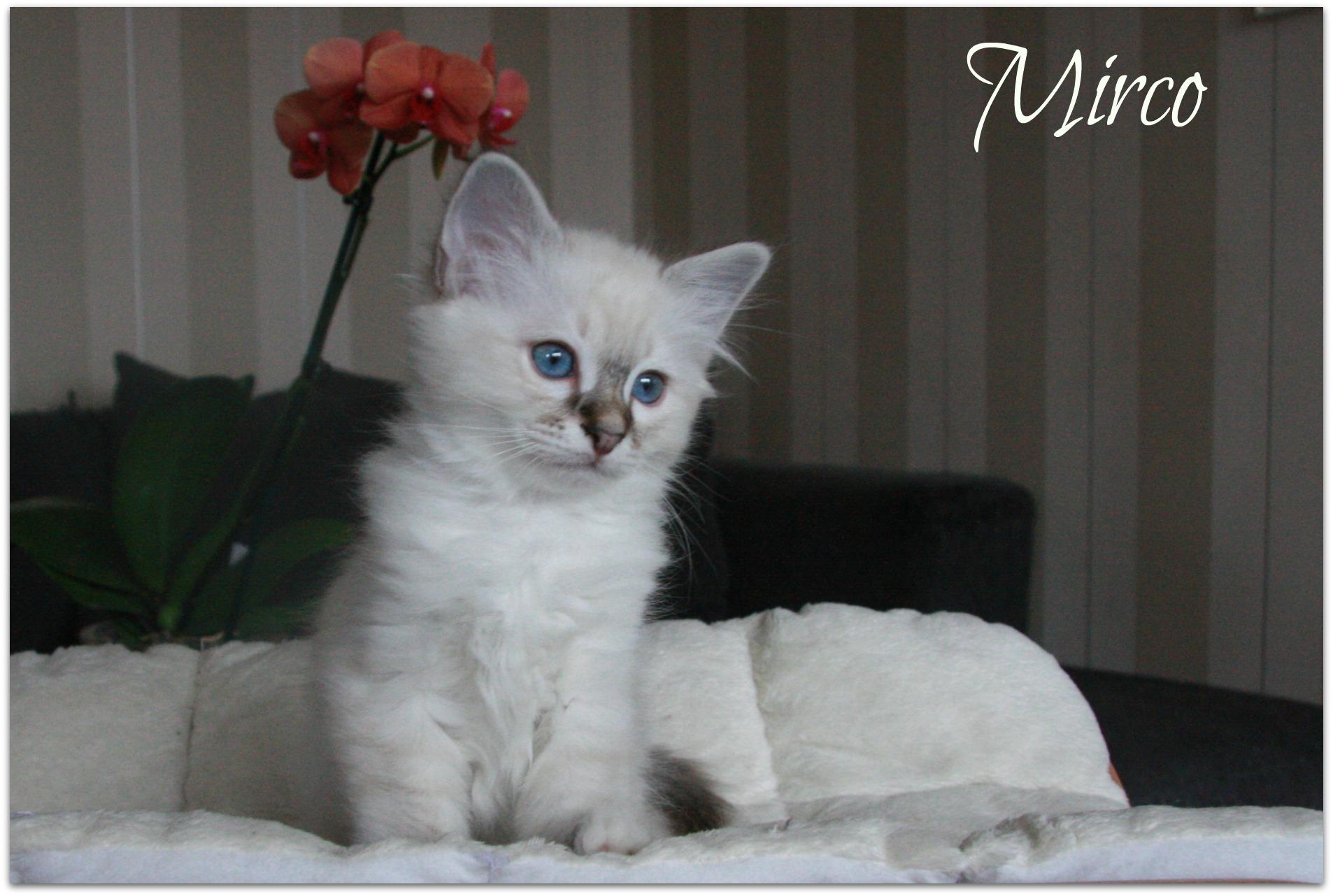 mirco2