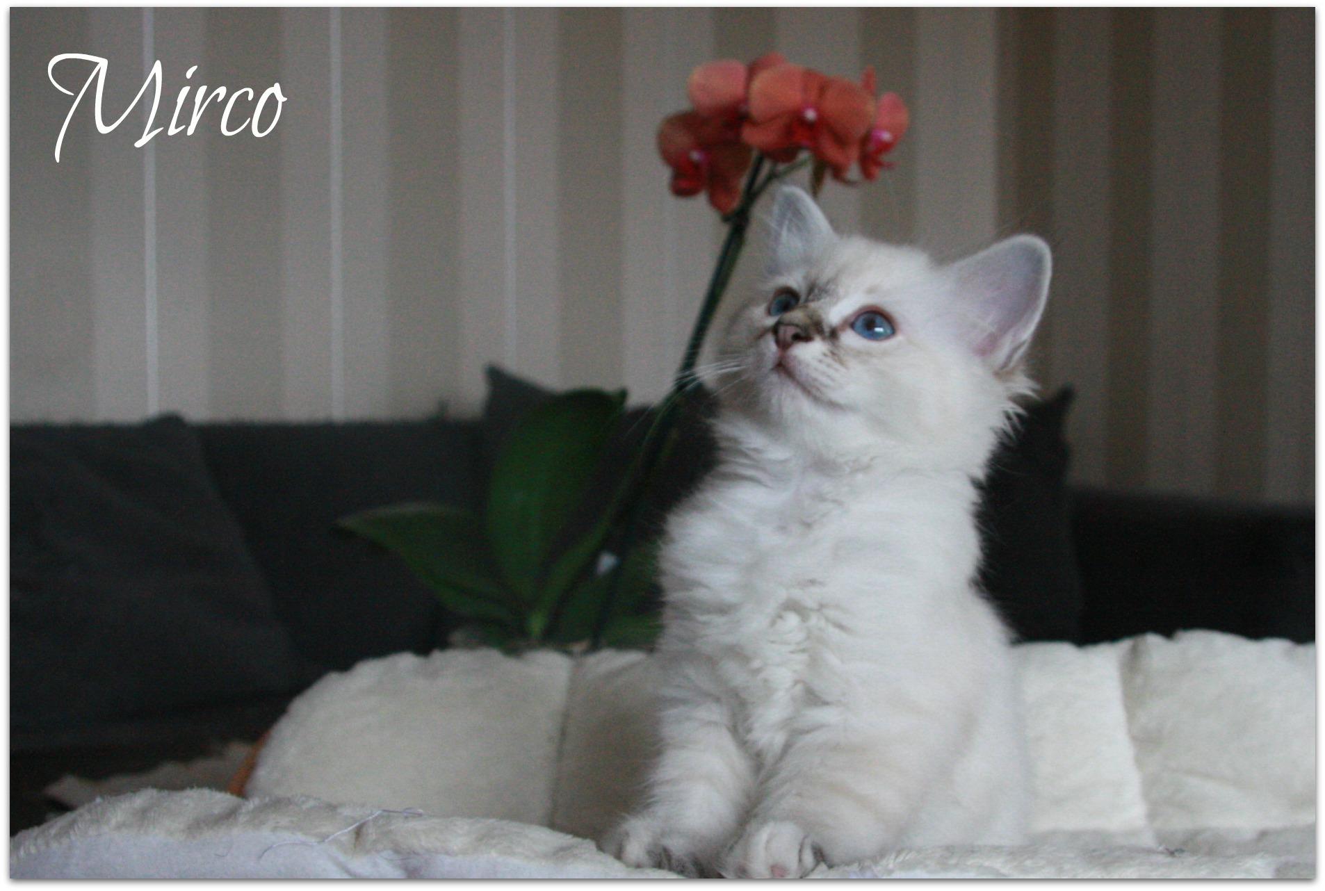 mirco3