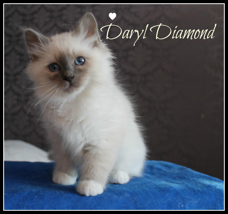 daryl-1