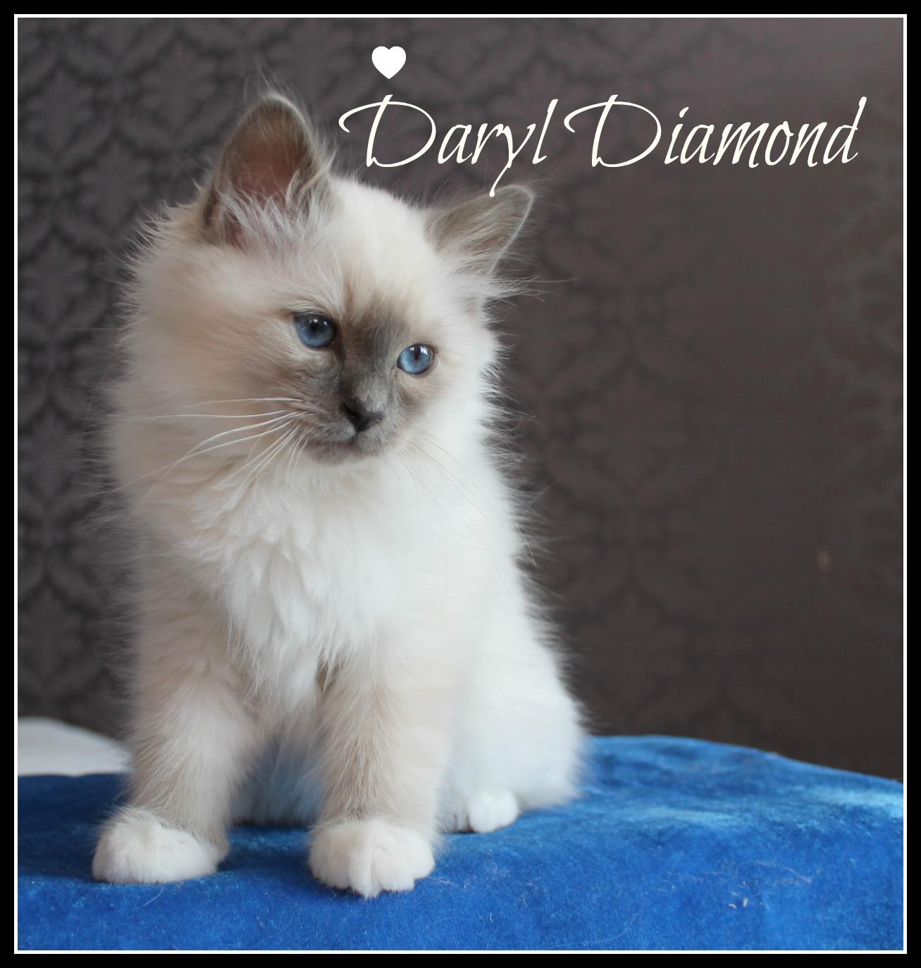 daryl-3