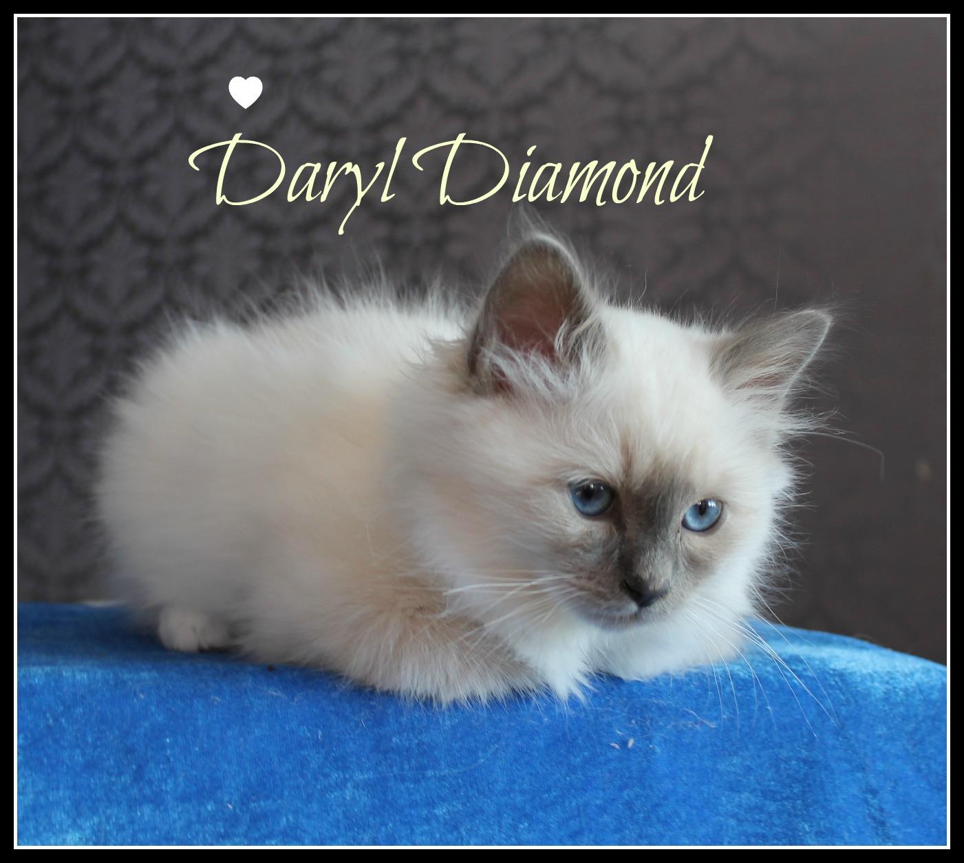 daryl-4