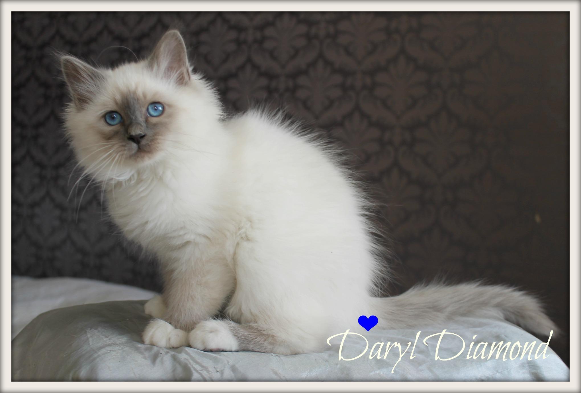daryl-sp