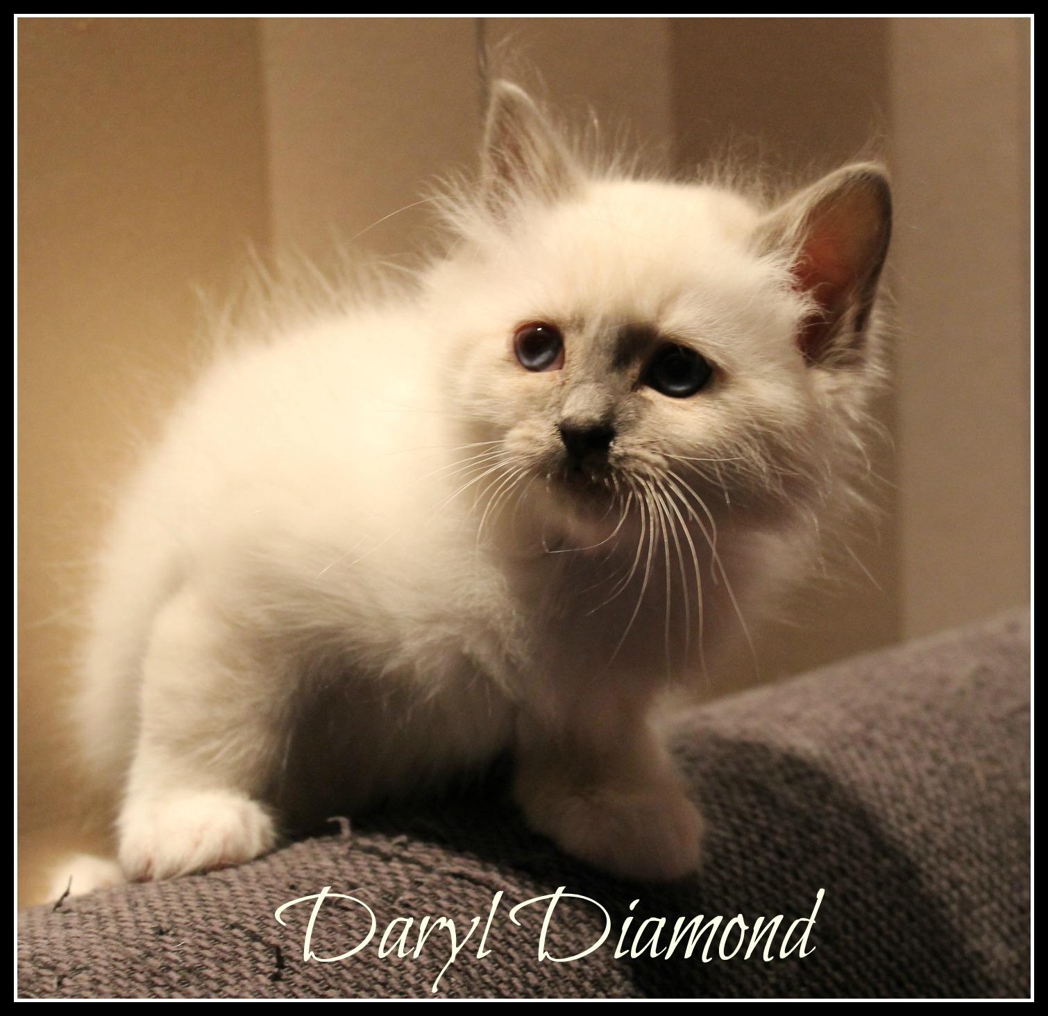 daryl2