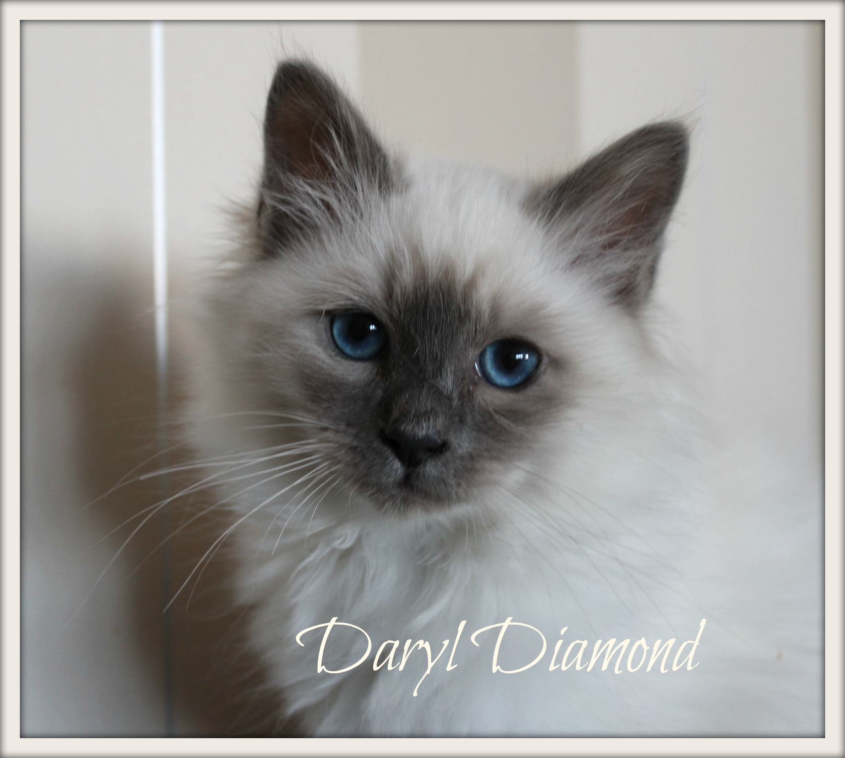 daryl_0