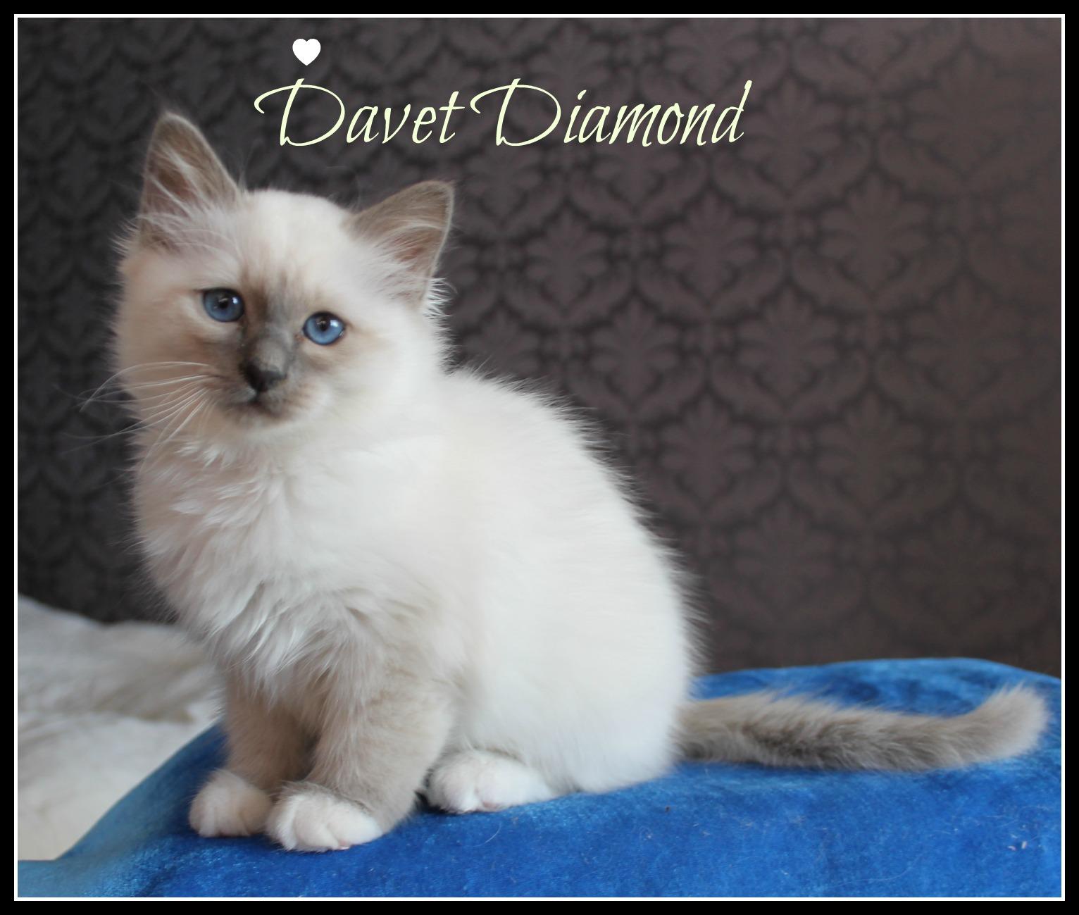 davet-1
