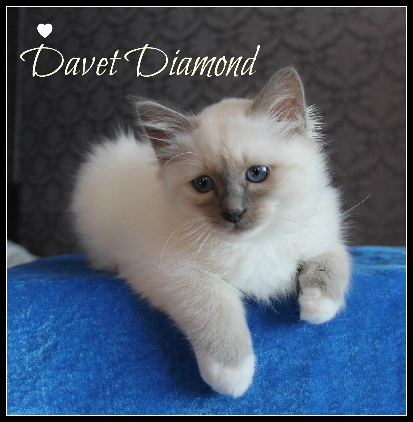 davet-3