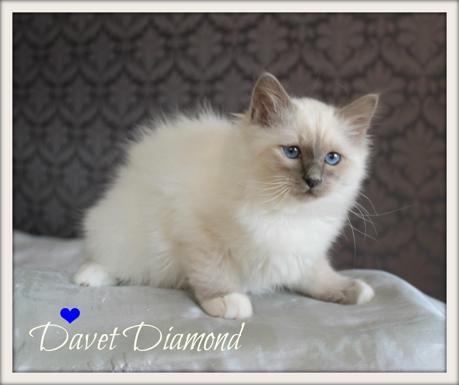 davet-sp