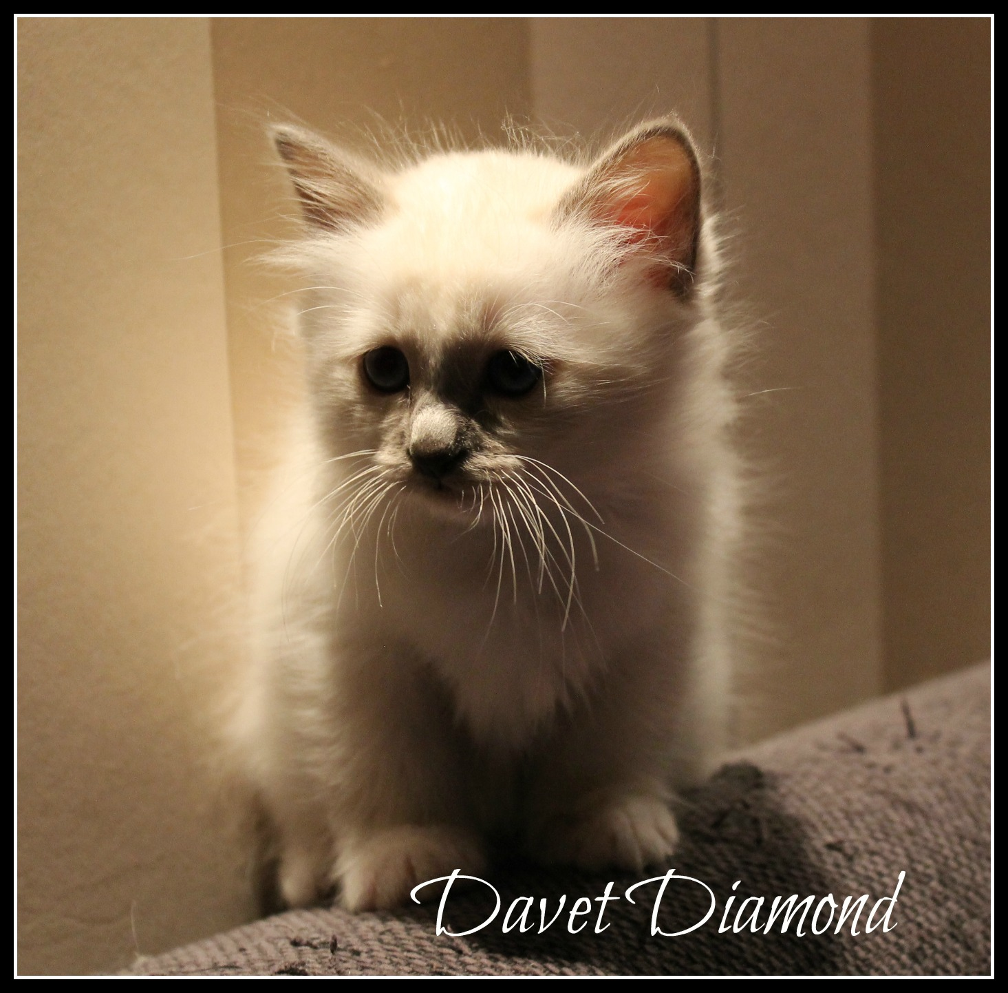 davet2