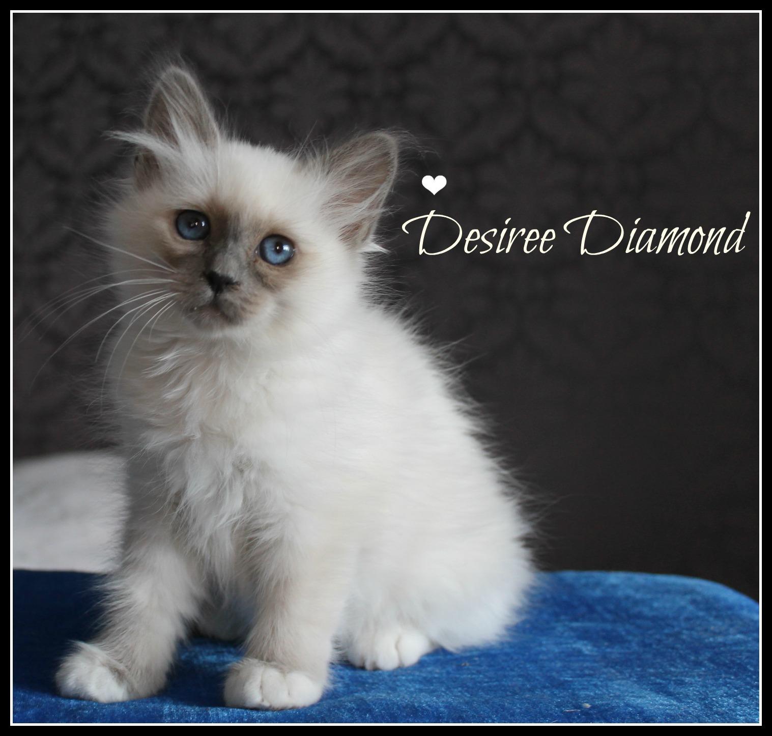 desiree-1