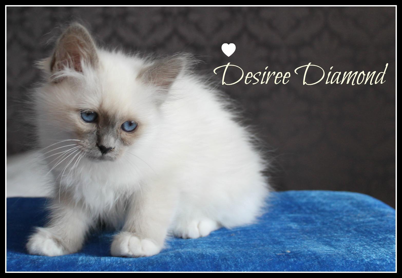 desiree-2