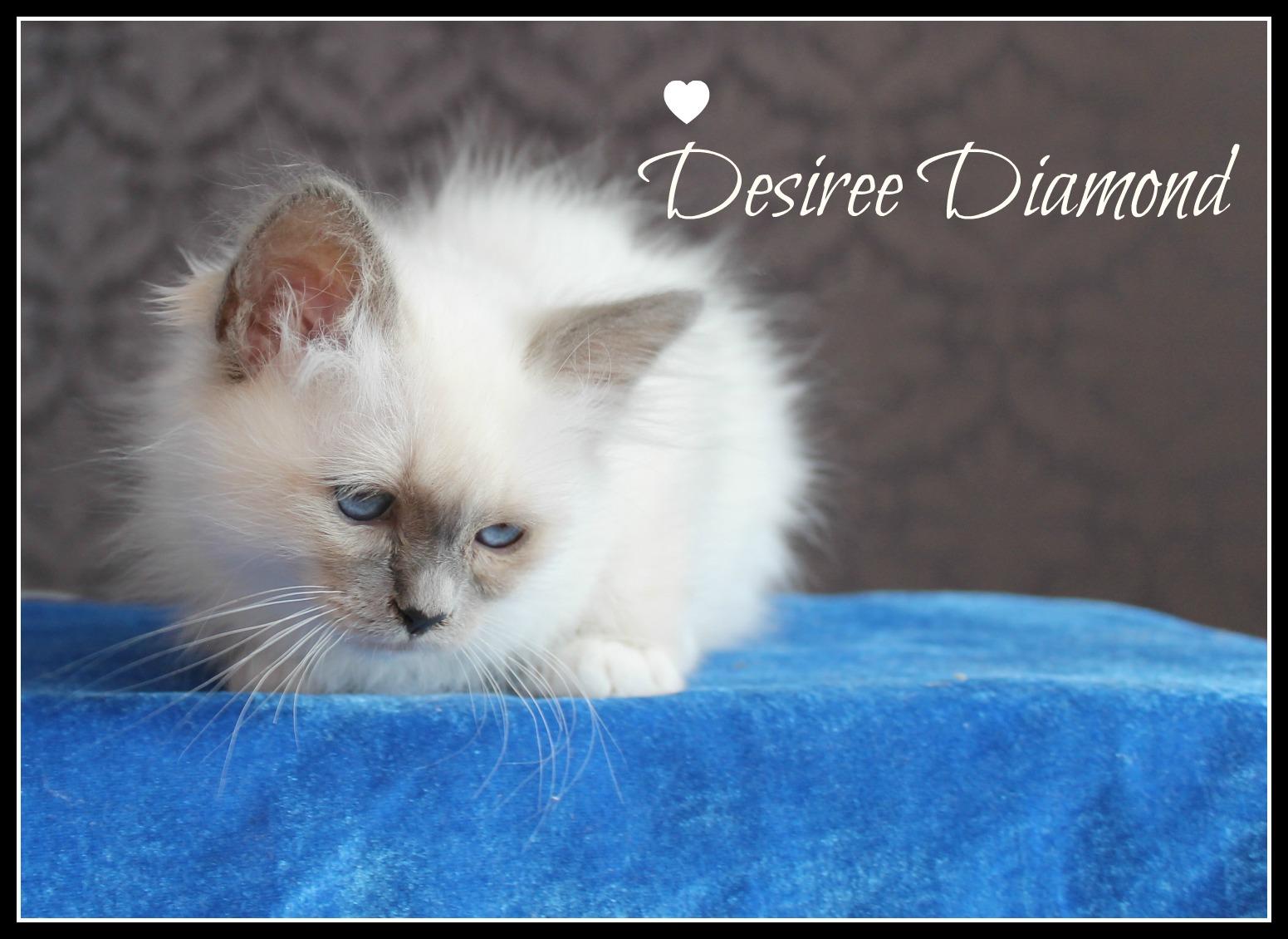 desiree-3