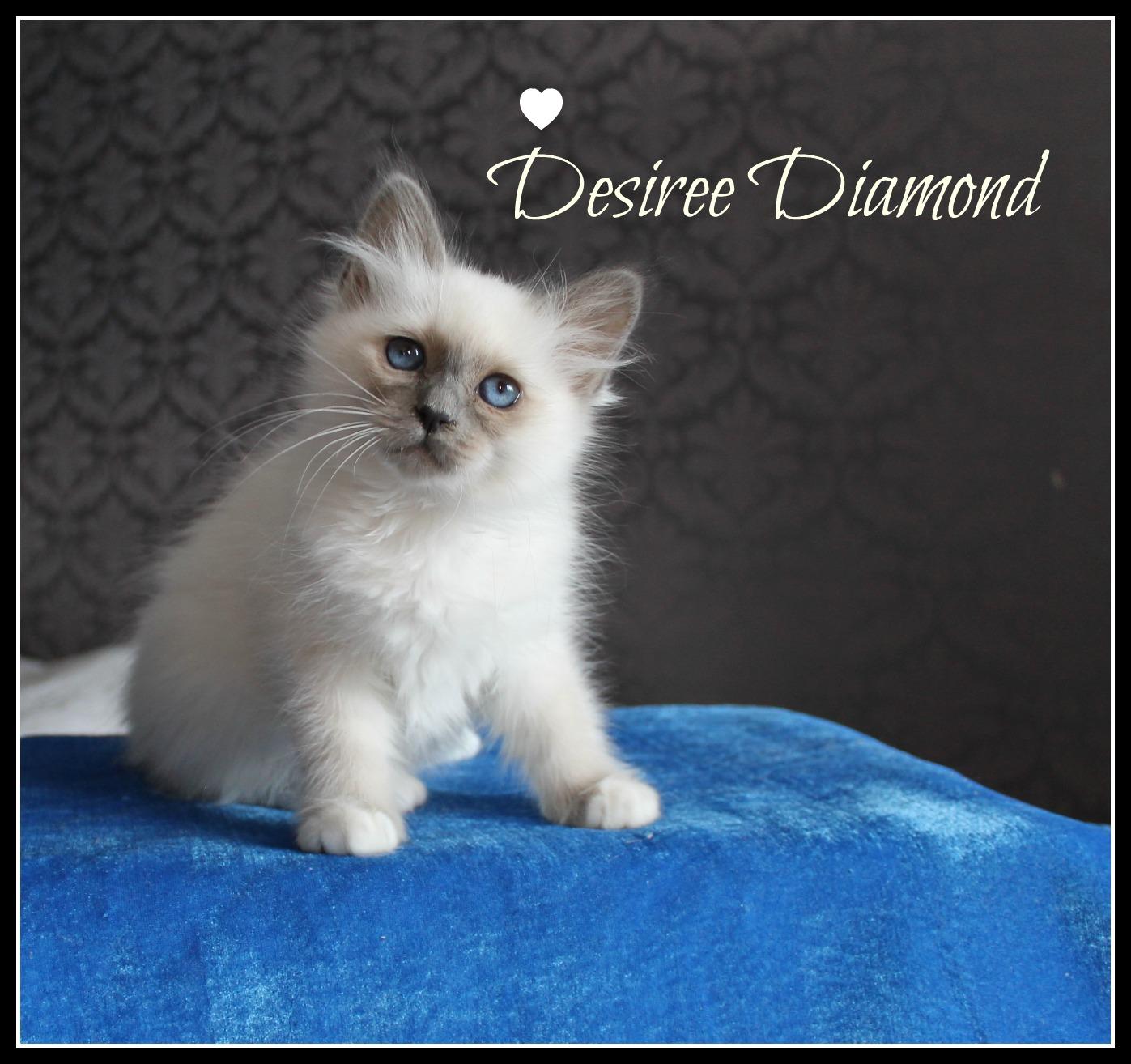 desiree-4