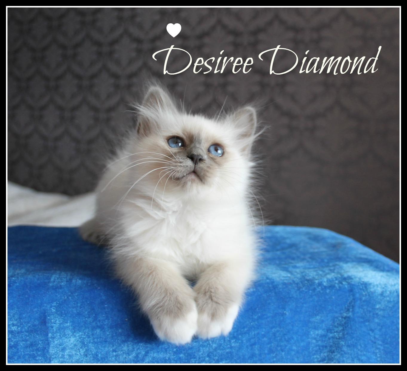 desiree-5