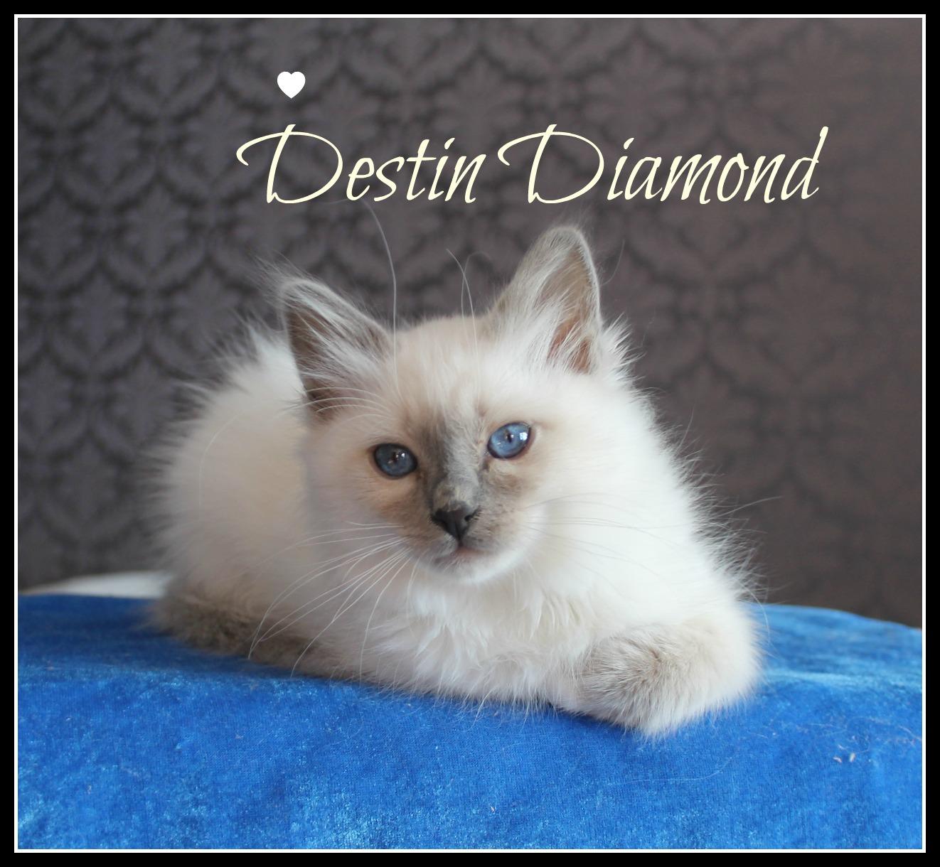 destin-2