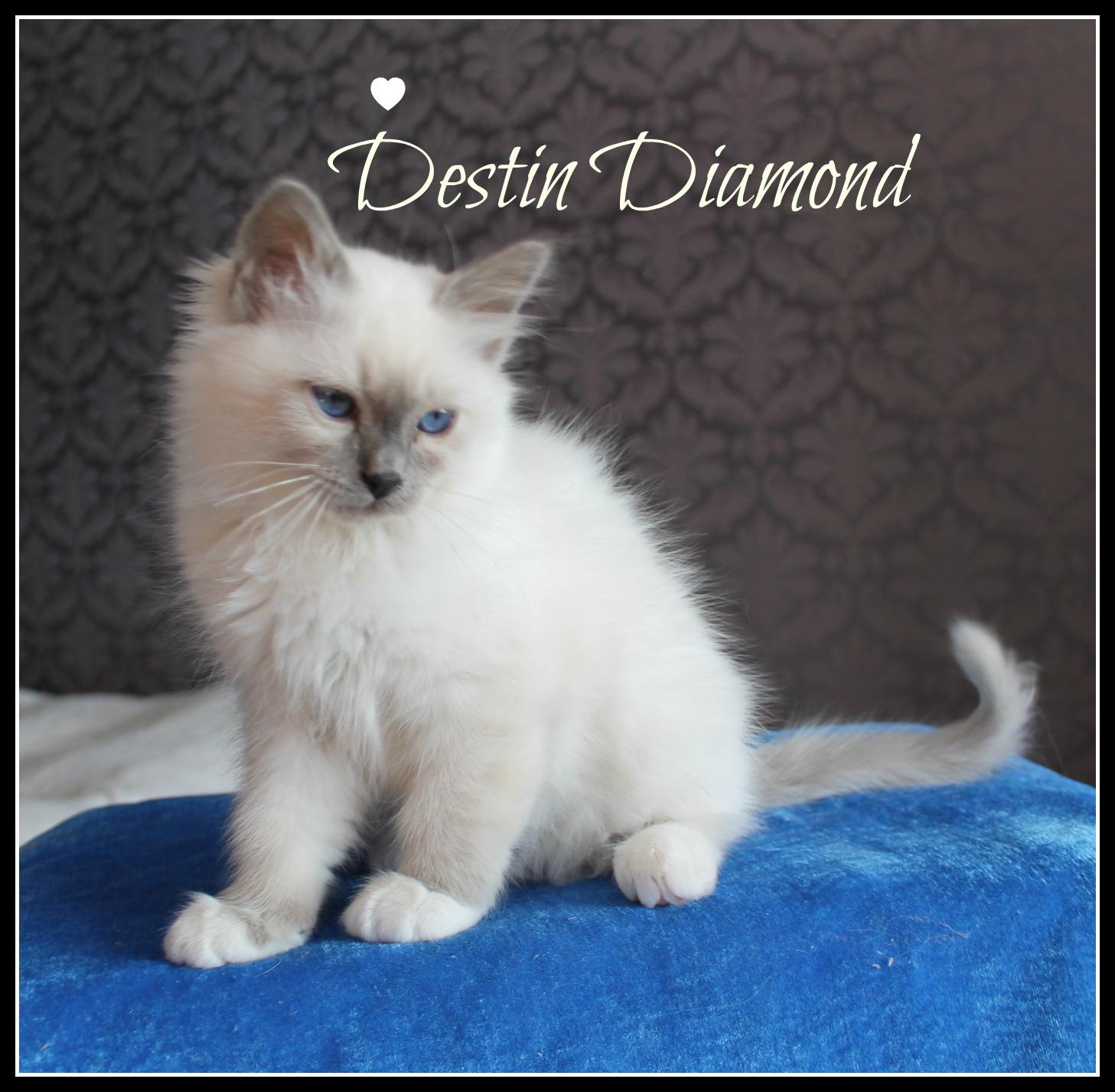 destin-4