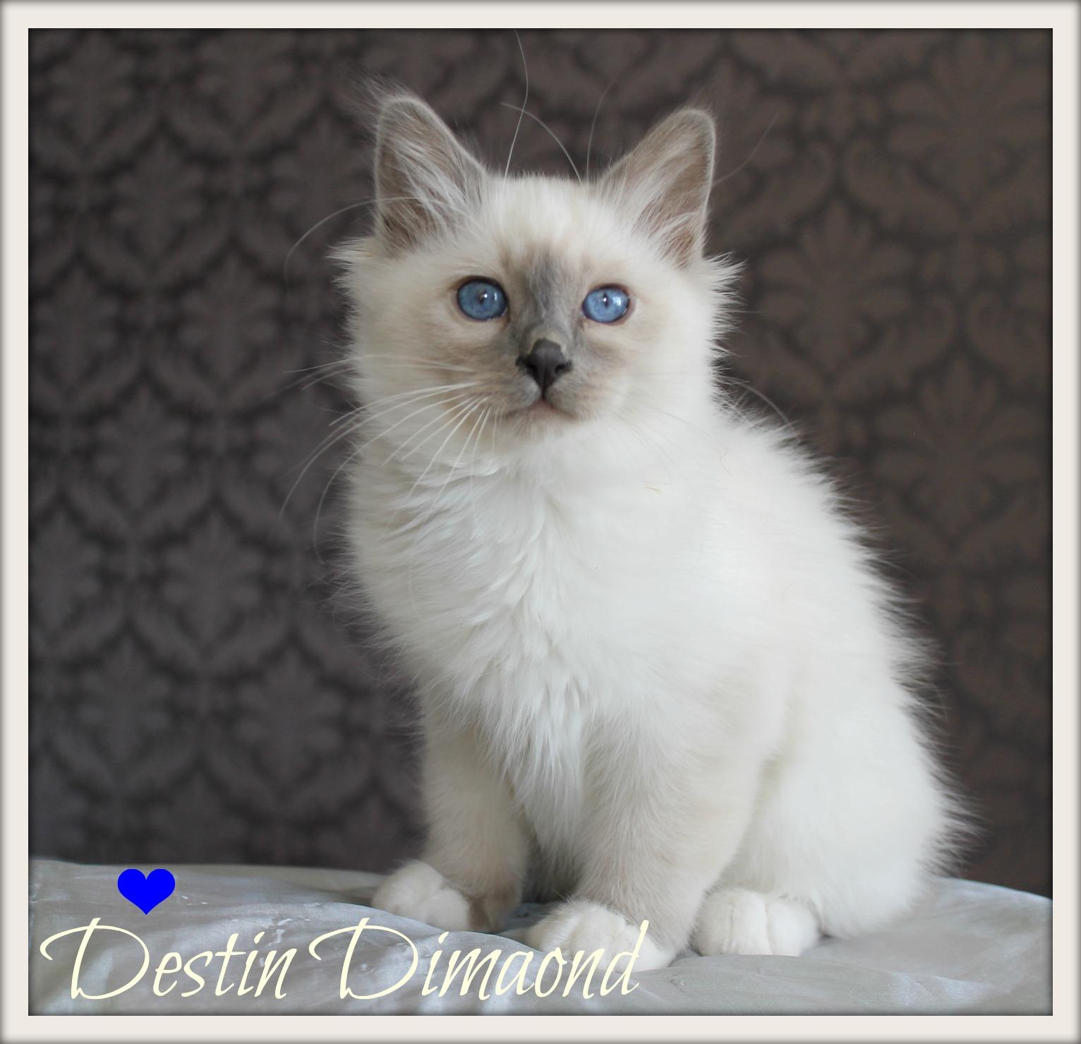 destin-sp