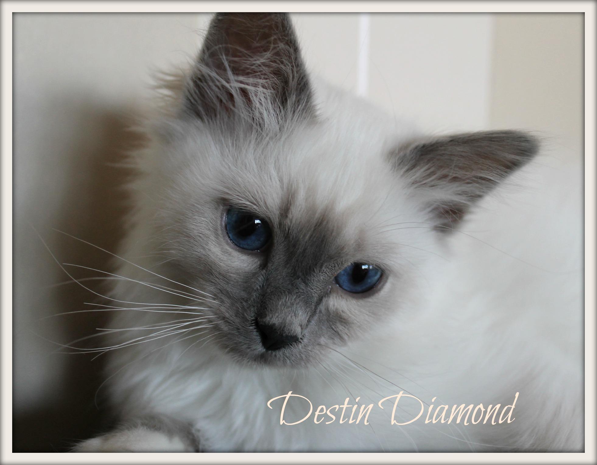 destin_0