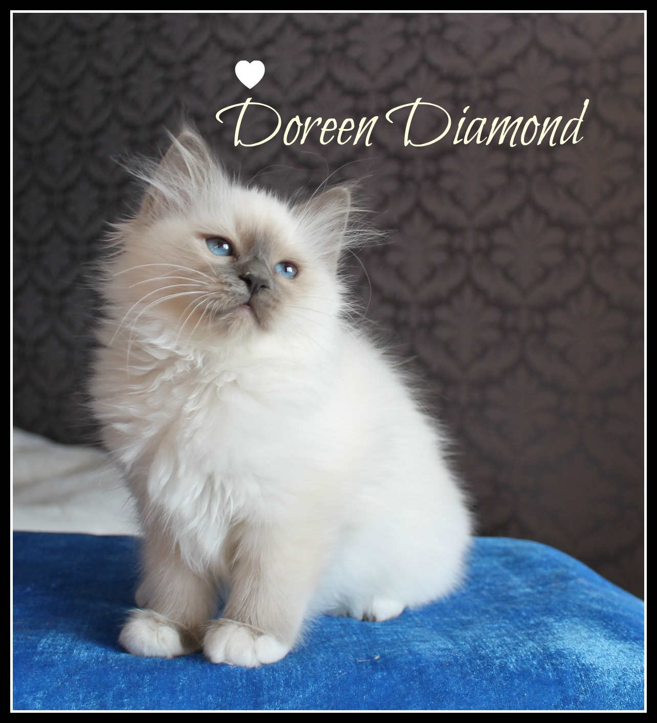doreen-3