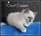 davet-2