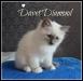 davet-4